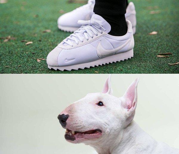 sneaker comedy club mars 2016 (10)
