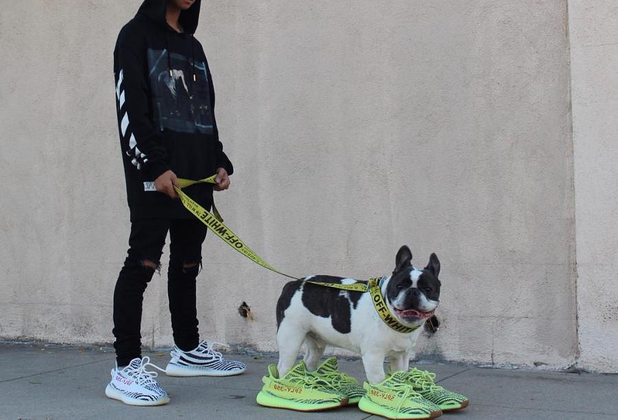 Chien en Adidas Yeezy 350 Boost V2 jaune Frozen Yellow